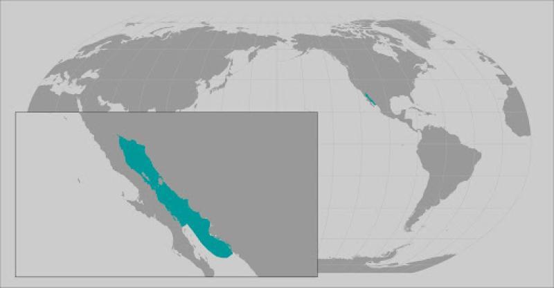 totoaba range map