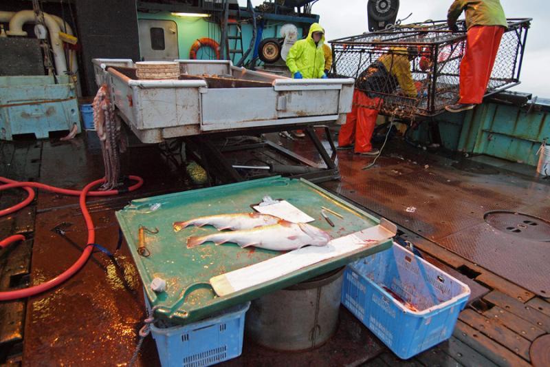Photo of observer fish sampling station on a fishing vessel deck