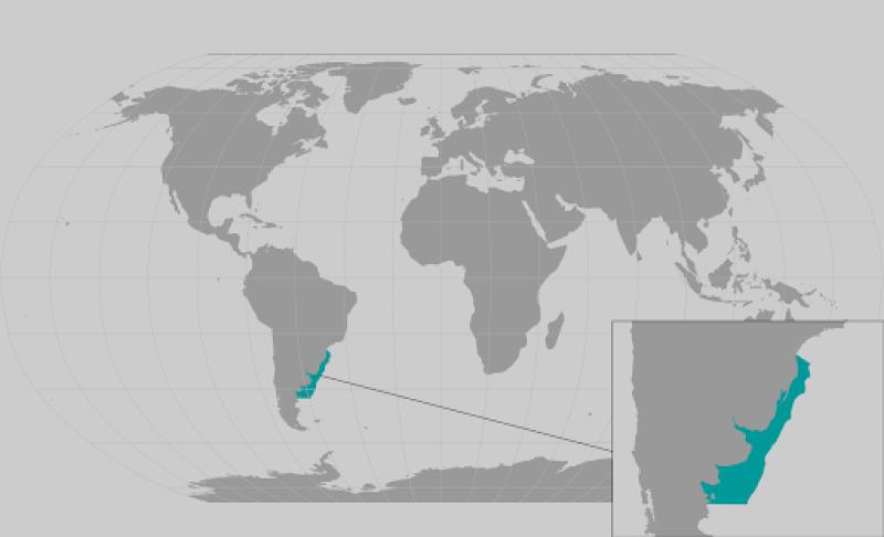 Argentine angleshark range map