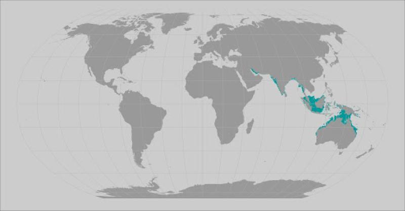 Narrow sawfish range map