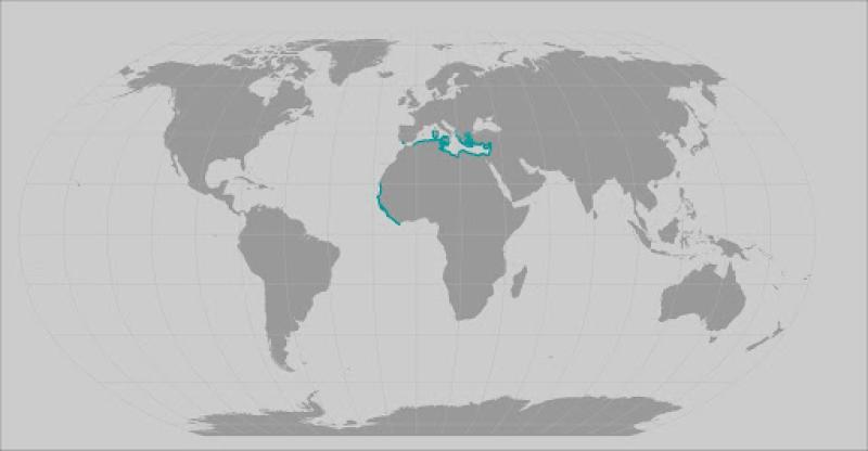 Sawback angleshark range map