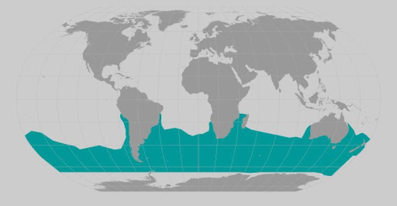 Southern right whale range map