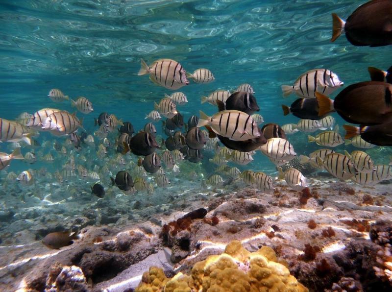 1116X831-ReefSurveyPicture.jpg