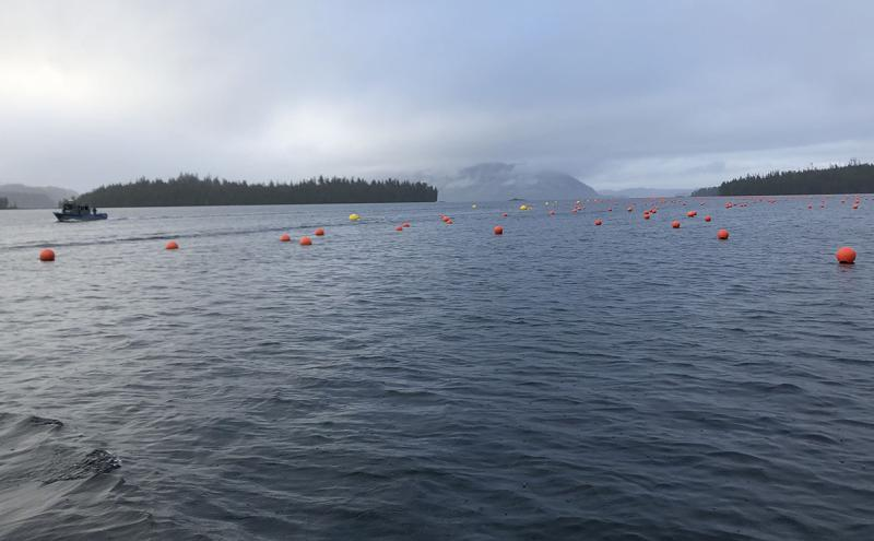 1200 x 750 AKR Hump Island oyster and seaweed farm.jpg