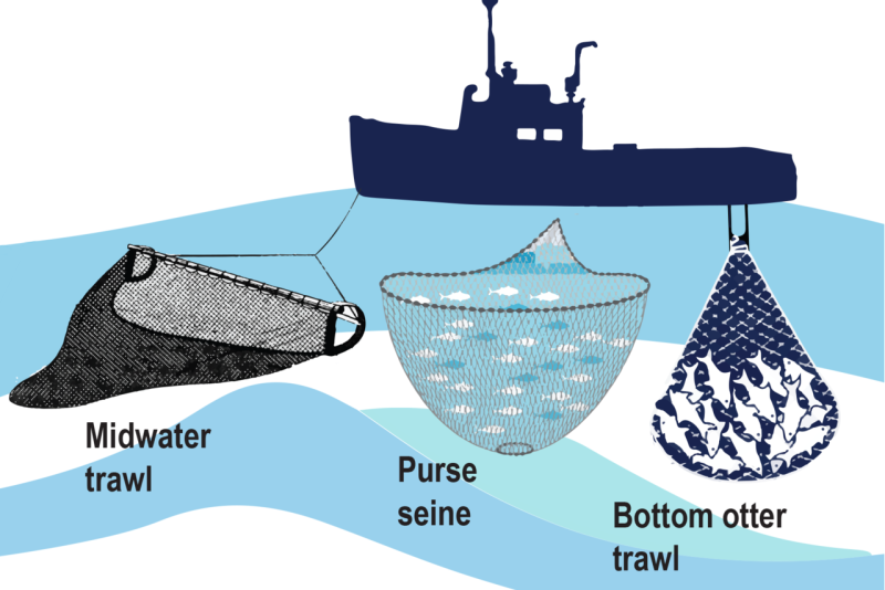 Infographic on trawl, purse seince and bottom otter trawl systems.