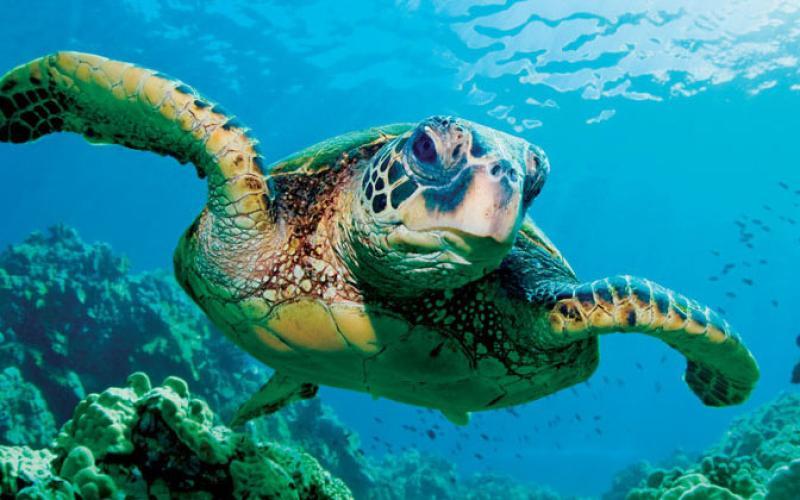 1280x800-sea-turtle-ucsc-edu.jpg