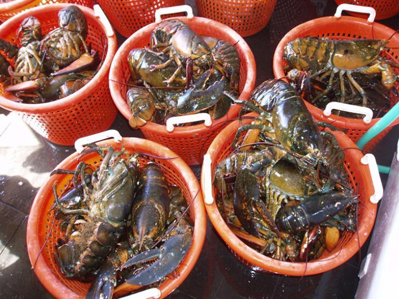 2015-lobster-buckets-OLE.jpg