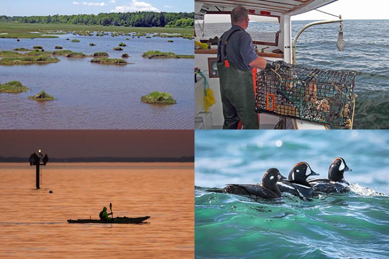 2017_07_habitat_month_public_winners_collage.jpg