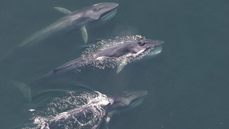 2020-whale-week-finback-1920x1080-desktop-300.jpg