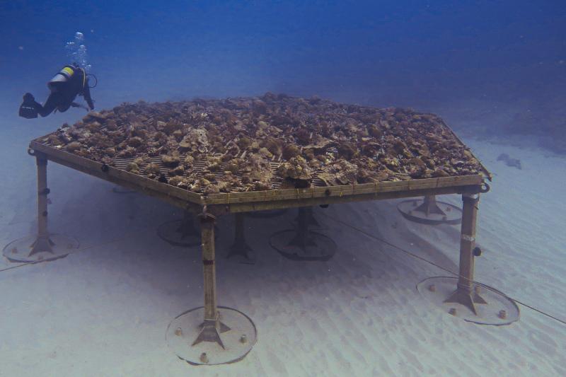 2400x1600-coral-nursery-full-NOAA-PIRO.jpg