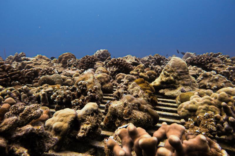 2400x1600-loaded-coral-nursery-ocean-NOAA-PIRO.jpg