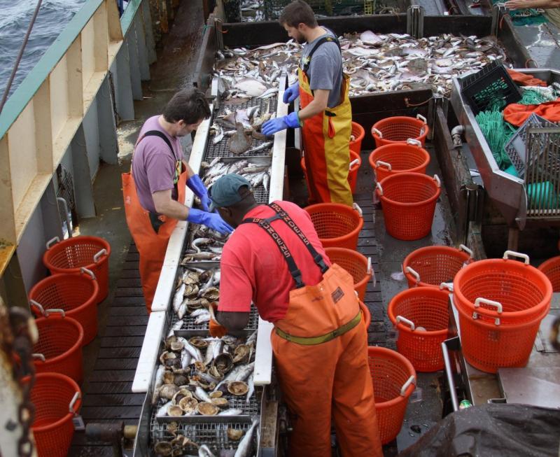 Sorting catch on board, sorting conveyor and orange buckets.