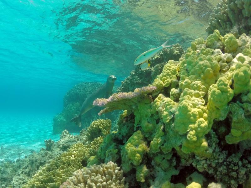 2545x1909-PIFSC-monk-seal-reef-Mark.Sullivan.jpg