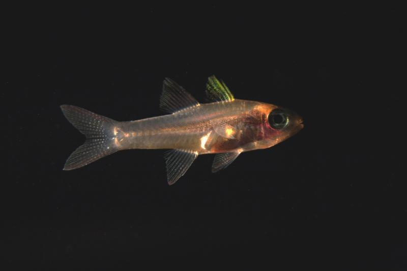 3504x2336-Pristiopogon-Cardinalfish-Jonathan-Whitney.jpg