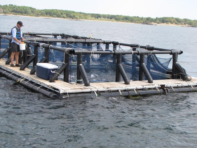 3648x2736-aquaculture-GARFO.JPG