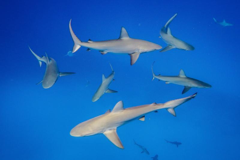 5472 x 3648-sharks.jpg