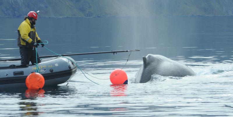 3700x1860dutch-harbor-whale-closeup-NOAA-AKR.png