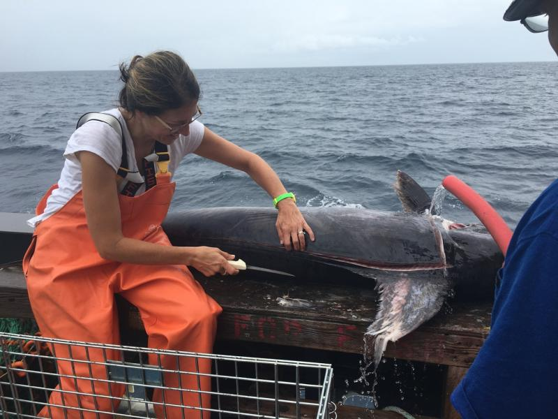 Holly McBride dissecting a swordfish at sea