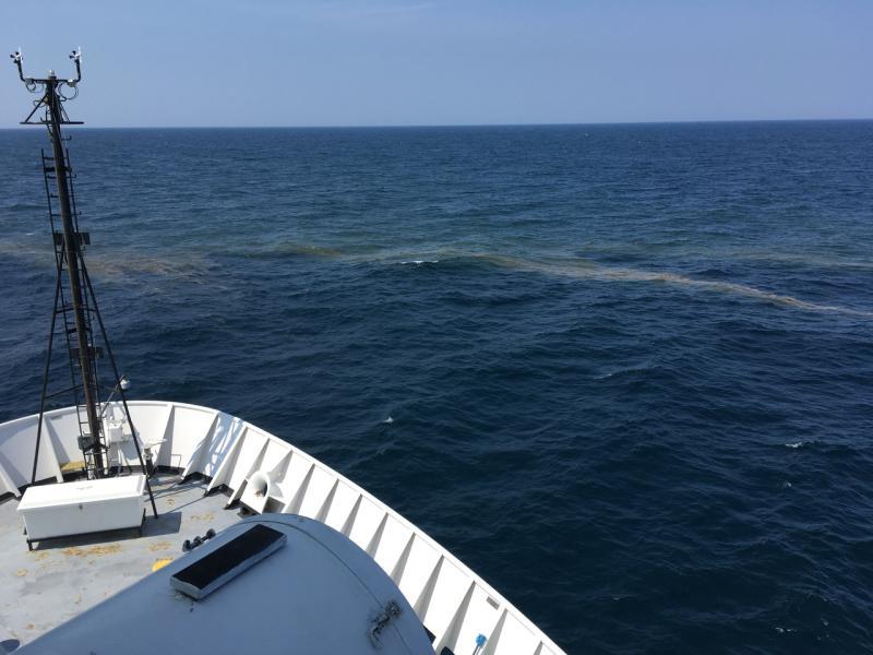 Trichodesmium bloom (light area) off the bow.