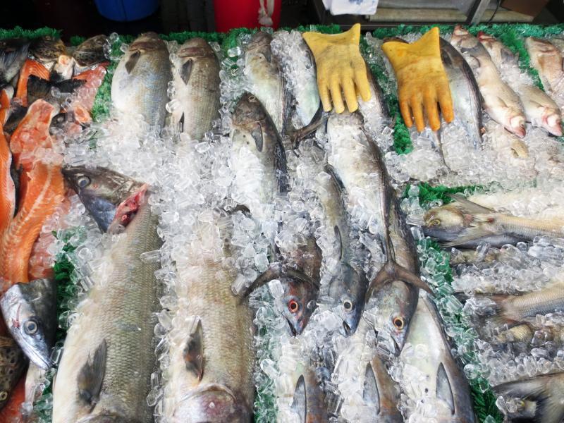 4608x3456-eastcoast-fish-market-AQ.jpg