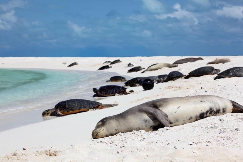 5512x3674-NOAA-PIFSC-Hawaiian-monk-seal-sleeping.jpg
