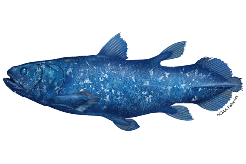 640x427-african-coelacanth.png