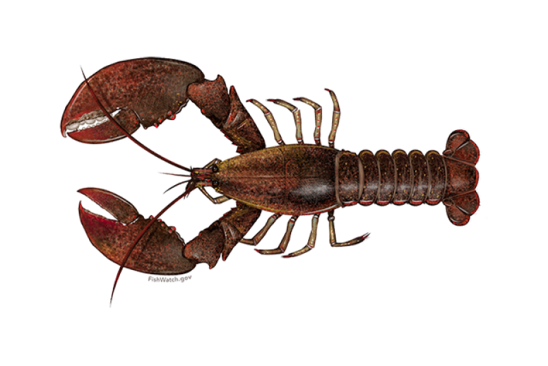640x427-american-lobster.png