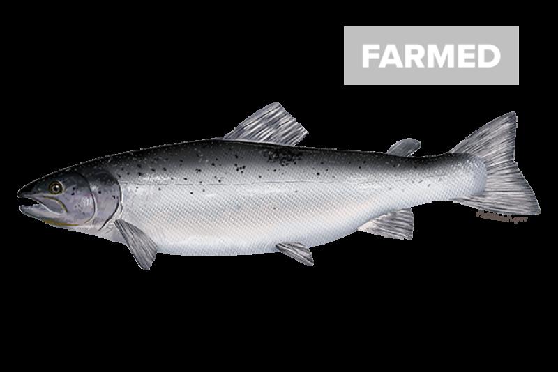 640x427-atlantic-salmon-farmed.png