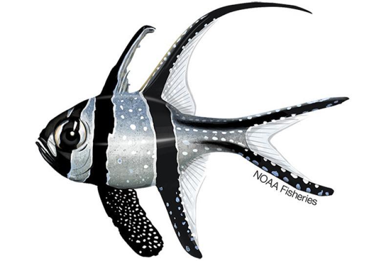 640x427-Banggai-Cardinalfish.jpg