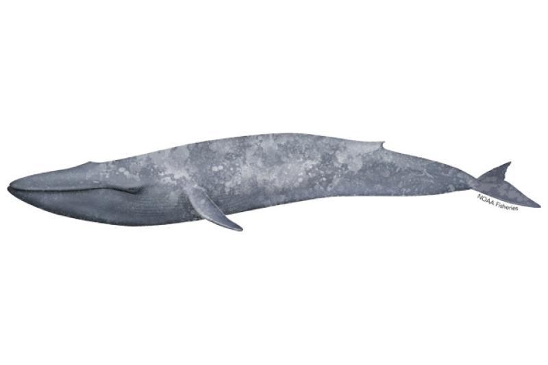 640x427-blue-whale.jpg