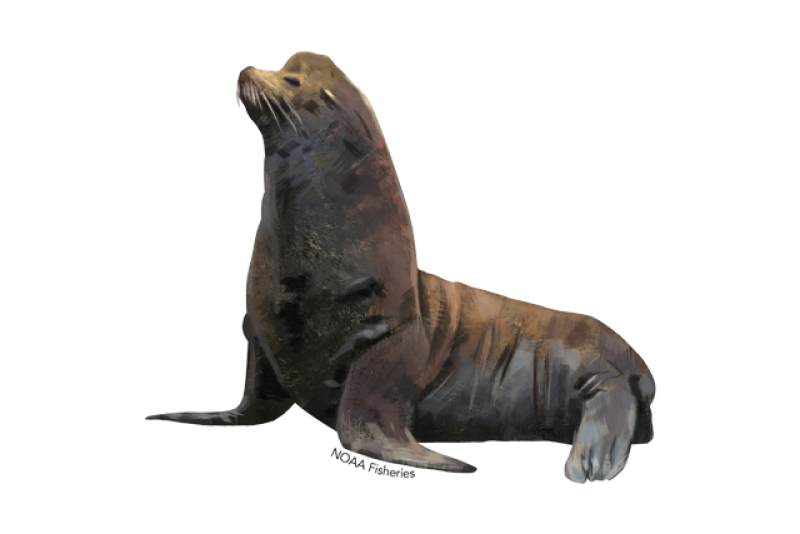 640x427-california-sea-lion.png