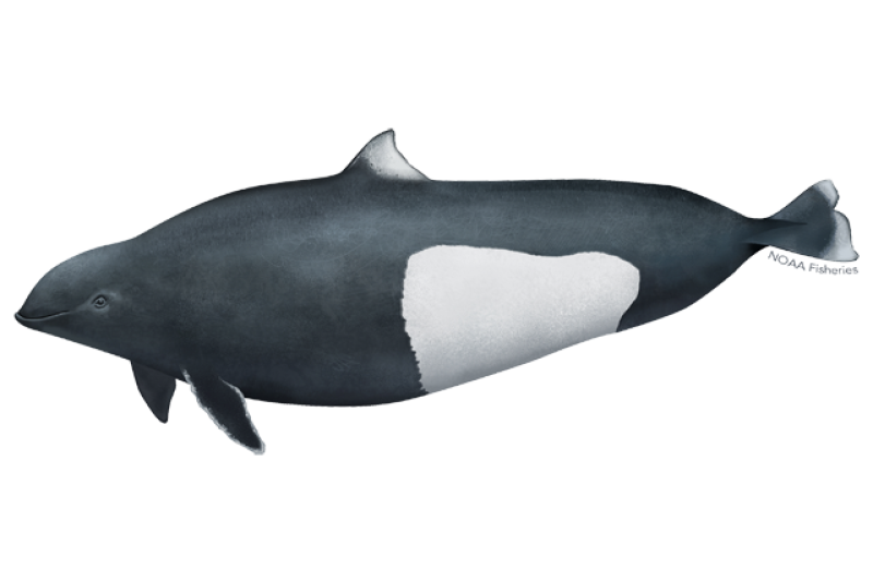 640x427-dalls-porpoise.png