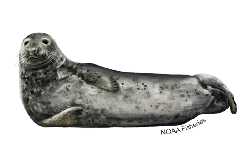 640x427-gray-seal.png