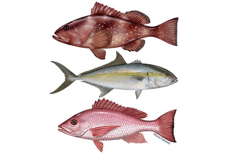 640x427-gulf-of-mexico-reef-fish.jpg