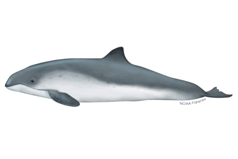 640x427-harbor-porpoise.png