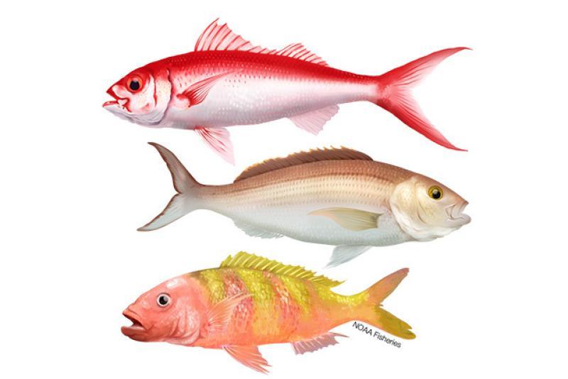 640x427-hawaiian-islands-deep7-bottomfish.jpg