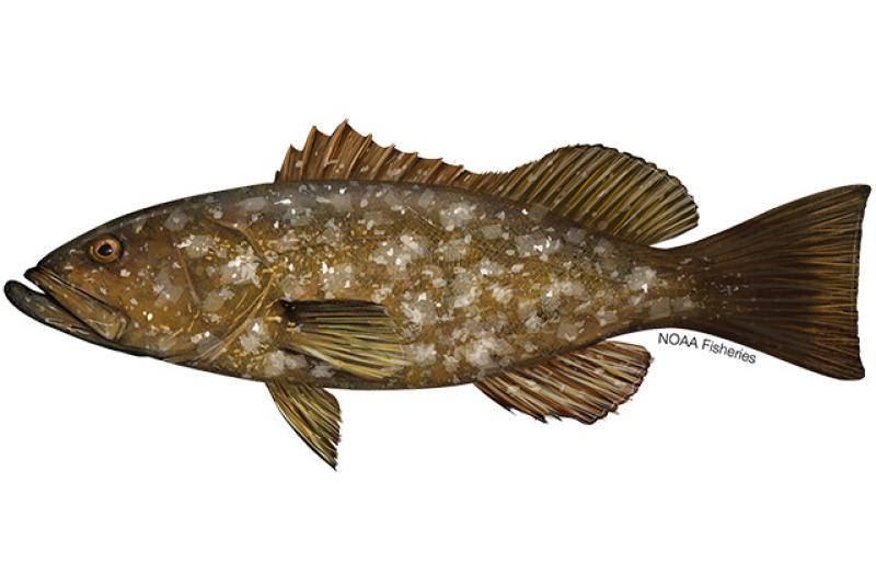 640x427-island-grouper.jpg