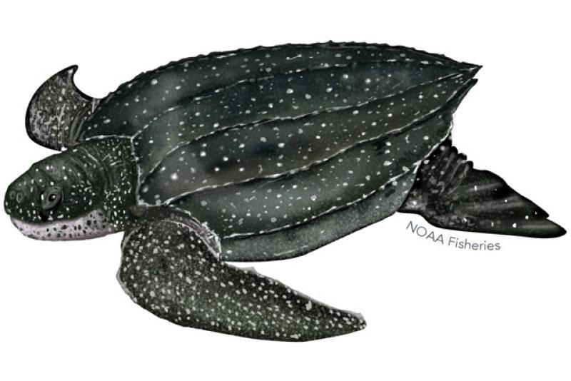 640x427-leatherback-turtle.jpg