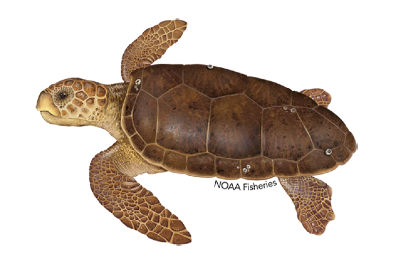 640x427-loggerhead-turtle.png