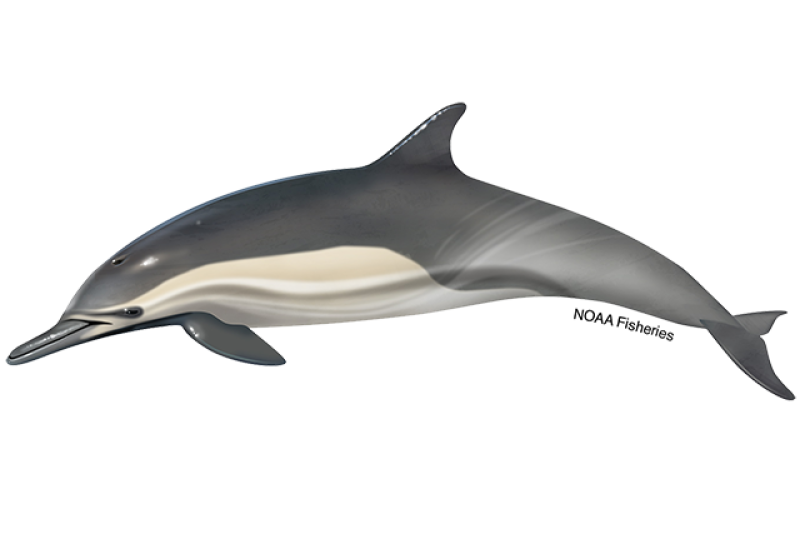 640x427-long-beaked-common-dolphin.png