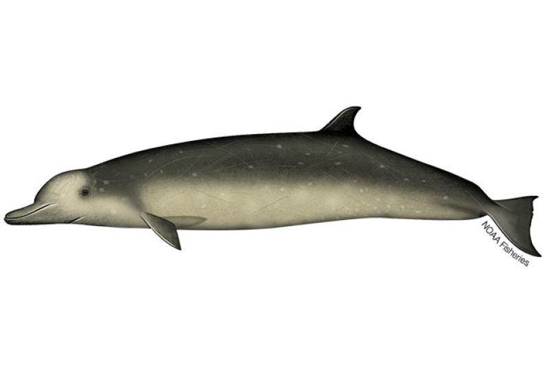 640x427-Longmans-Beaked-Whale.jpg