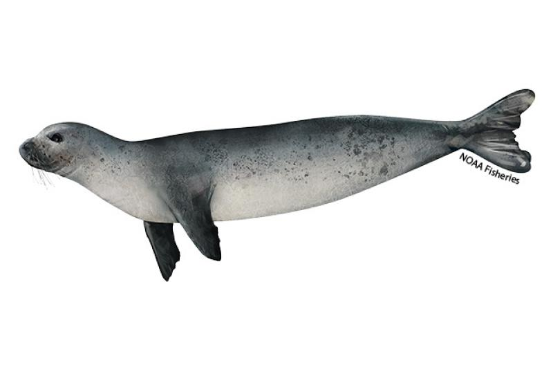 640x427-Mediterranean-monk-seal-juvenile.jpg