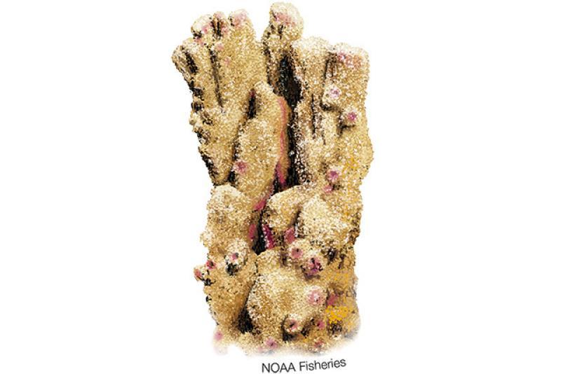 640x427-montipora-australiensis-coral.jpg
