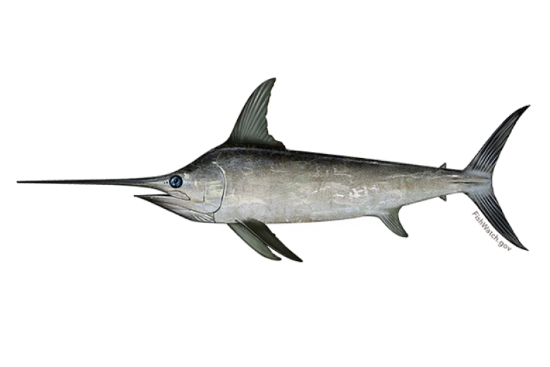 640x427-north-atlantic-swordfish.png