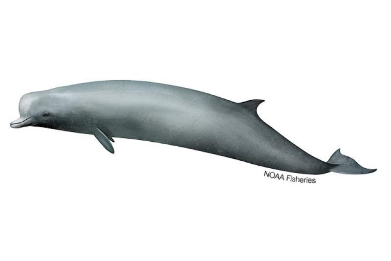 640x427-Northern-Bottlenose-Whale.jpg