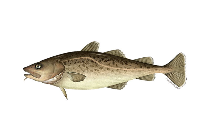 640x427-pacific-cod.png