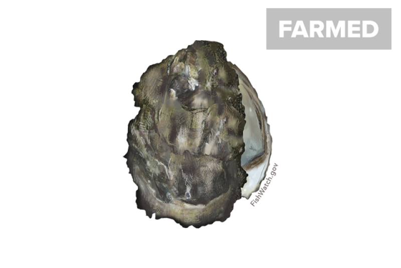 640x427-pacific-oyster.png