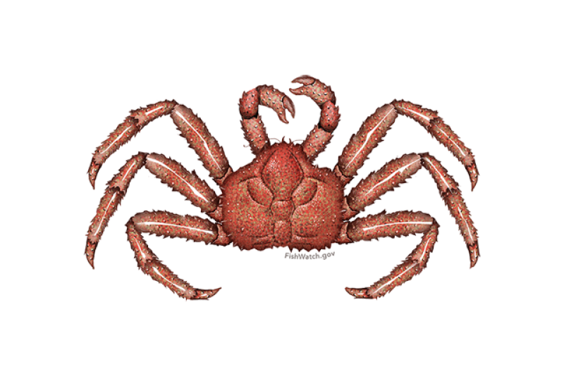 640x427-red-king-crab.png