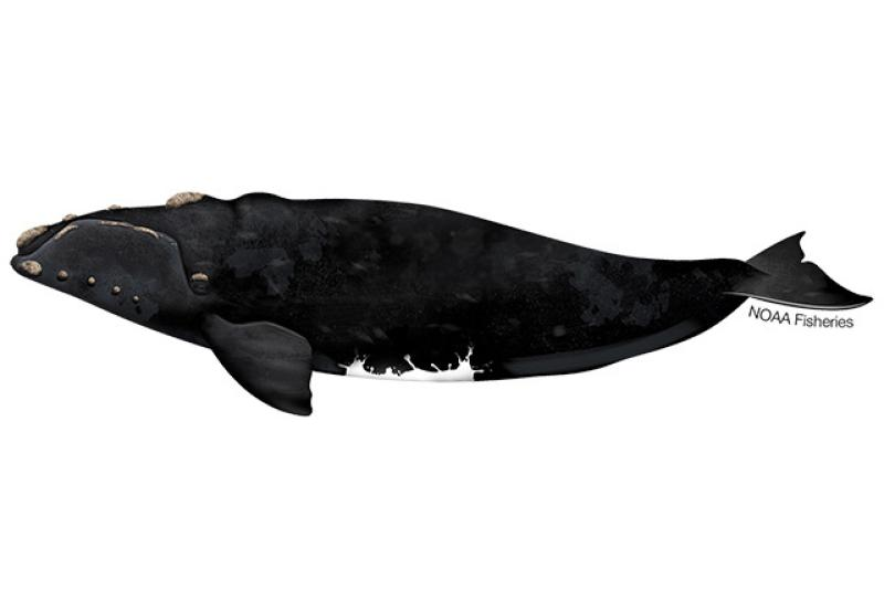 640x427-southern-right-whale.jpg