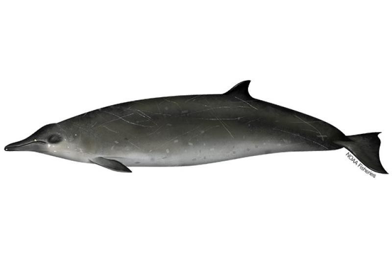 640x427-sowerbys-beaked-whale.jpg